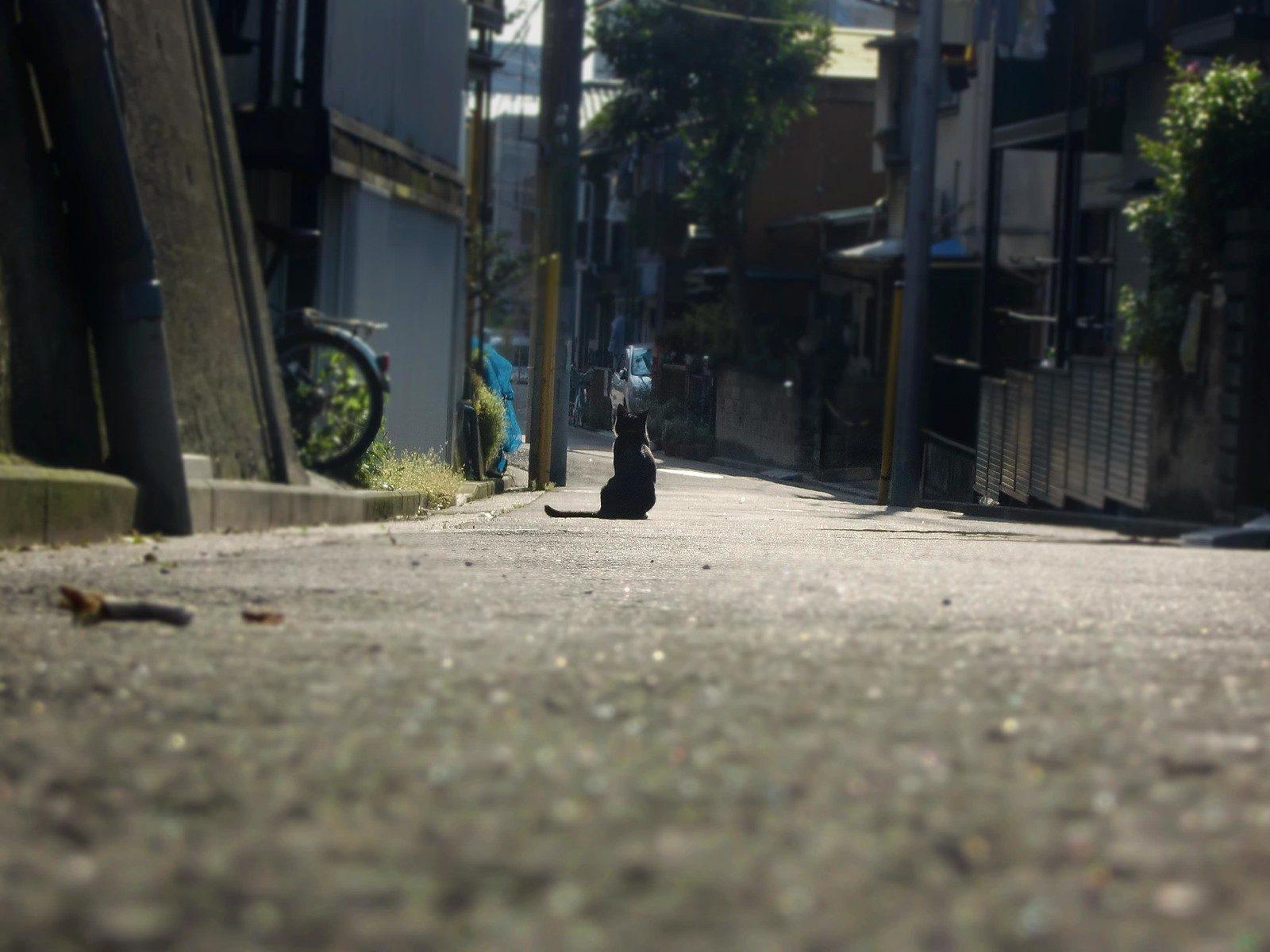 路地奥にたたずむ黒猫