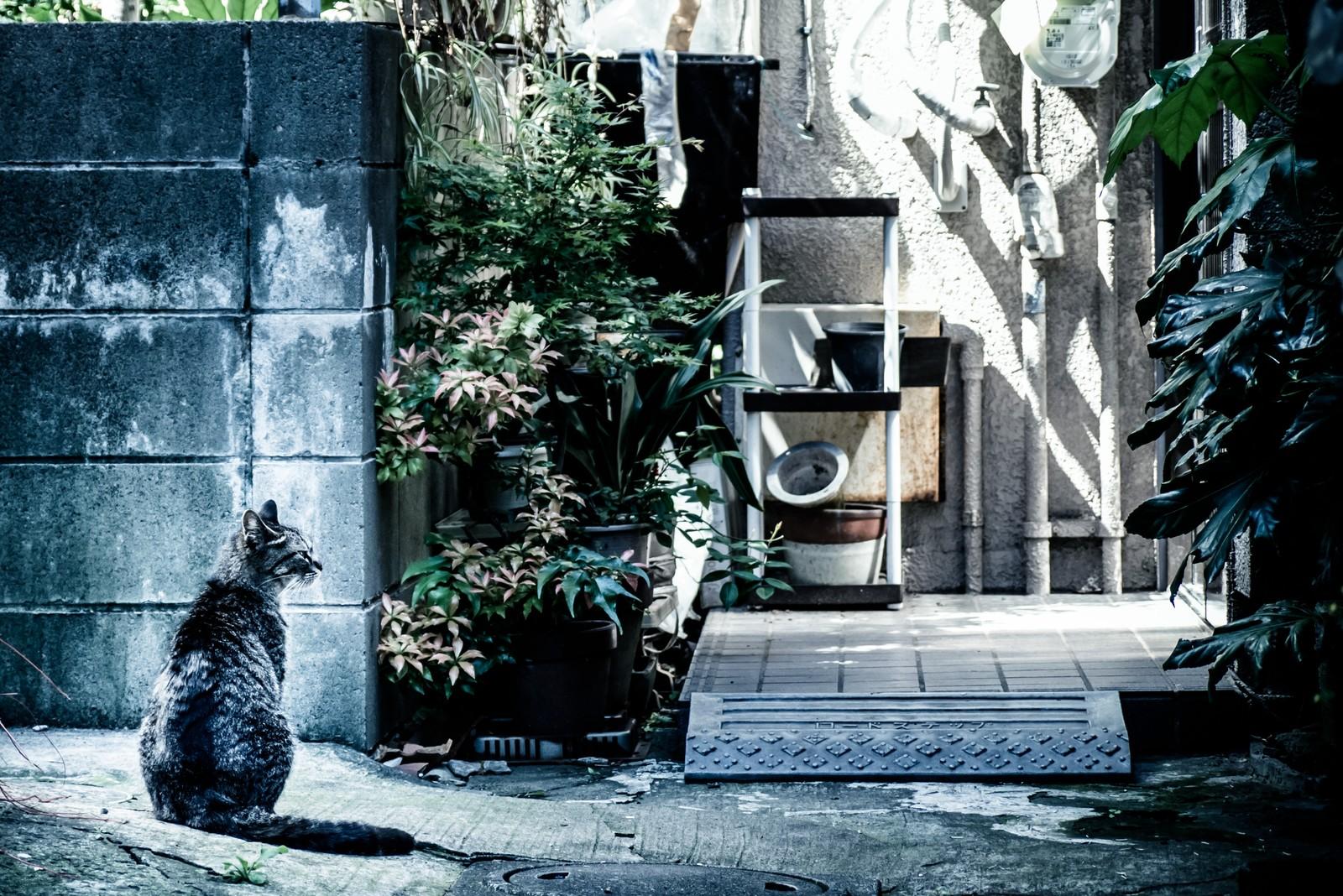 住宅の裏で誰かを待つ猫