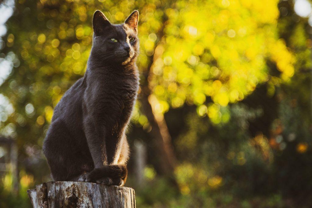 黒い猫と秋